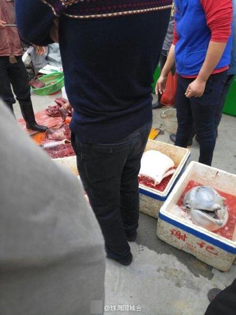 快要絕種的稀有「中華白海豚」被人砍了頭放在保溫盒裡,警察心痛把屍體收集組起來...
