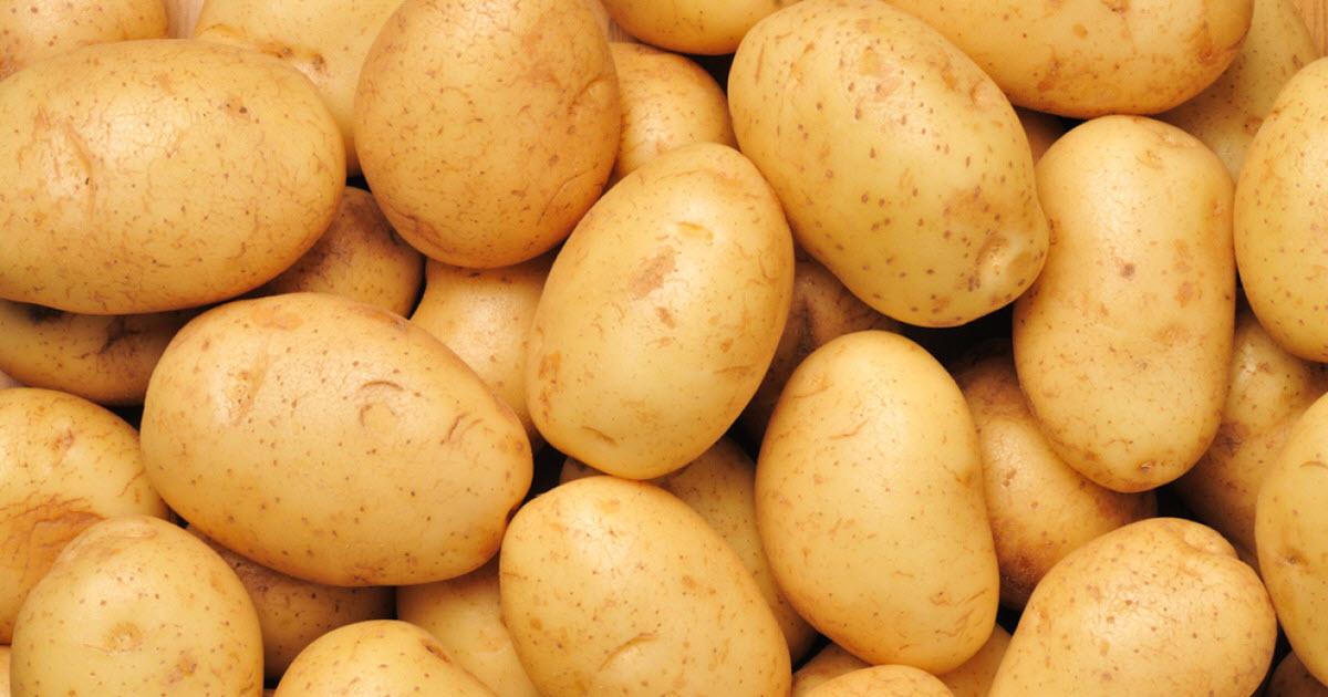 馬鈴薯可以發電比煤油更便宜,微波一下「可以用40天」!(不信你可以Google)