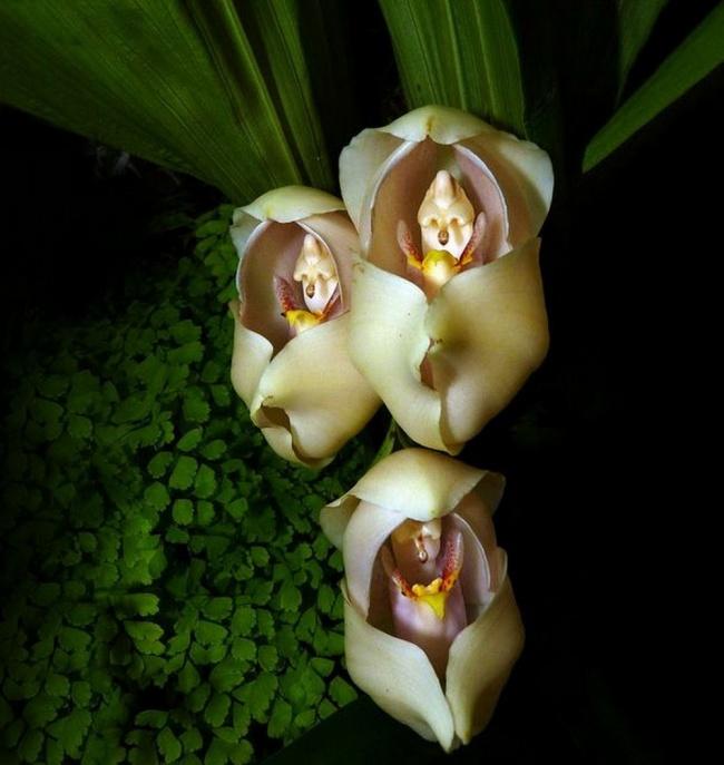 17個「一直不知道自己其實是植物」的長得像其它生物花