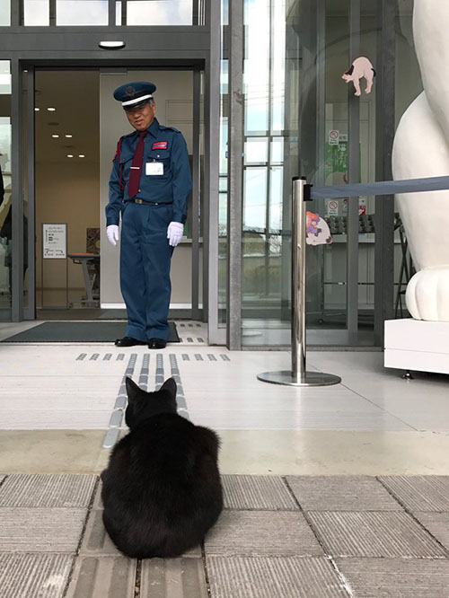 這間日本博物館每次展覽「貓咪藝術時」都會有貓咪想闖進去,還會耍小計謀想騙過警衛!