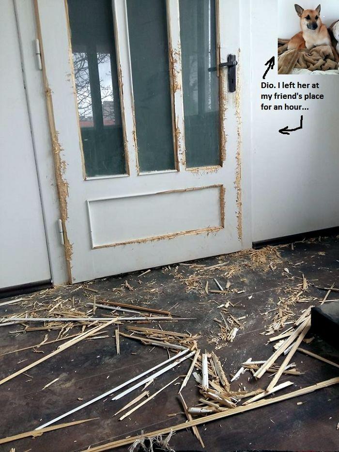 35個家裡被毛小孩摧毀「老闆我真的沒有騙人」的超慘主人!