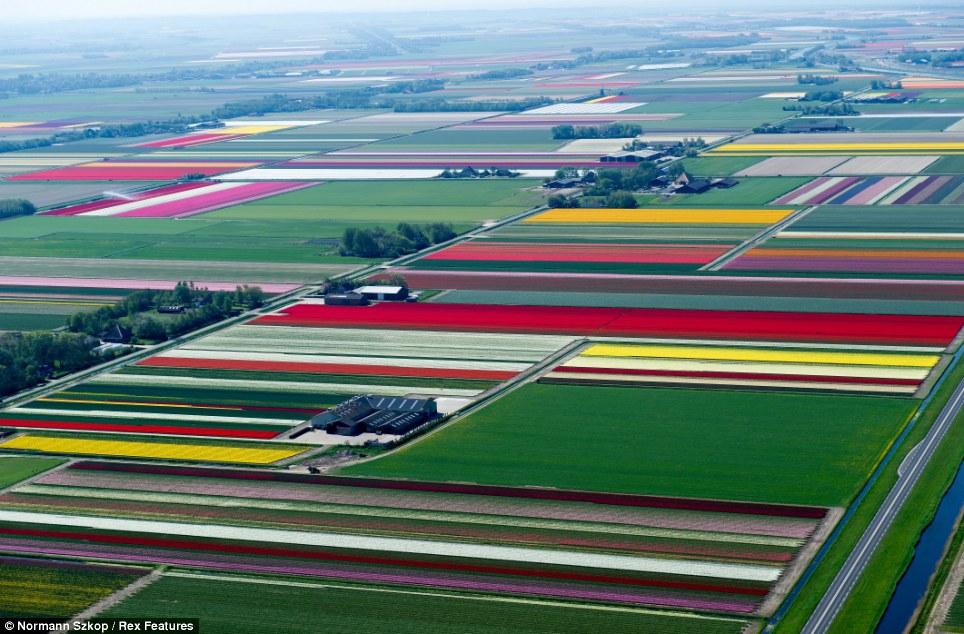 攝影師在荷蘭高空拍下的照片,會是你一生中看過最美的景色!(6張)