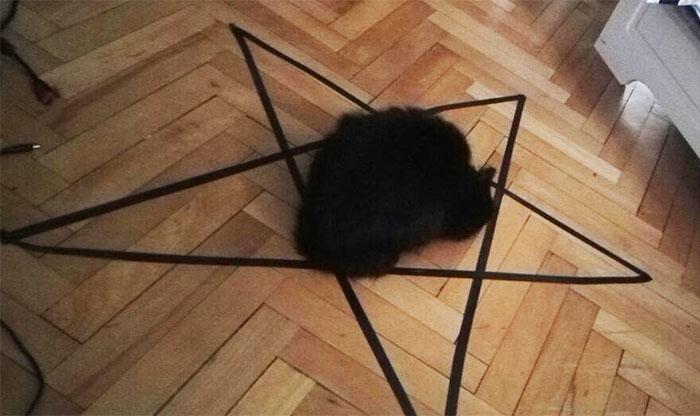 他在地上畫3種圖想終結「黑貓是邪惡」的謠言,讓貓心動的「最後一種邪惡圖形」讓他想立刻逃離屋子...