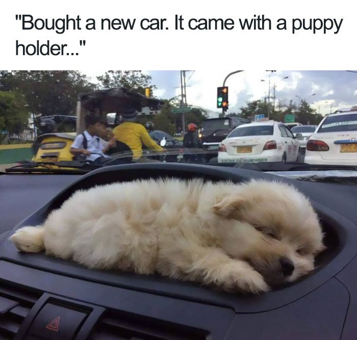 funny wholesome animal memes 11 40 adorable animals taking a sip from the meme stream  (40 Photos)