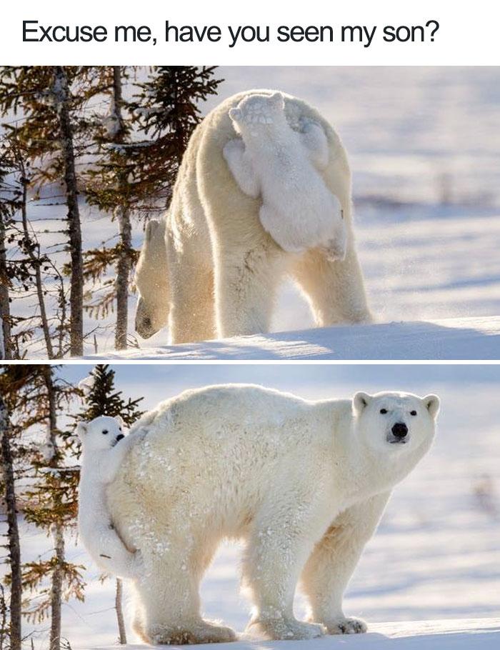 30個你看過後世界就終於不是黑白色的超可愛動物舉動。