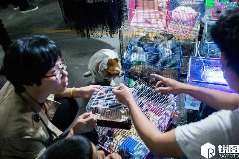 狗媽媽在寵物店前「守護待售小狗」不願走,小狗被賣掉後「她拼命狂追」全網心碎...(6張)