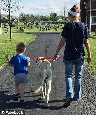 狗狗被找到時「全身有60個洞」,主人還以為只是被蟲咬但送到獸醫時「氣到快哭」!