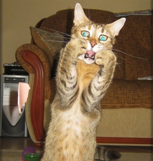 30張喵星人才最該得「奧斯卡影帝」的爆笑照片!#5 比李奧納多的神鬼獵人還猛!