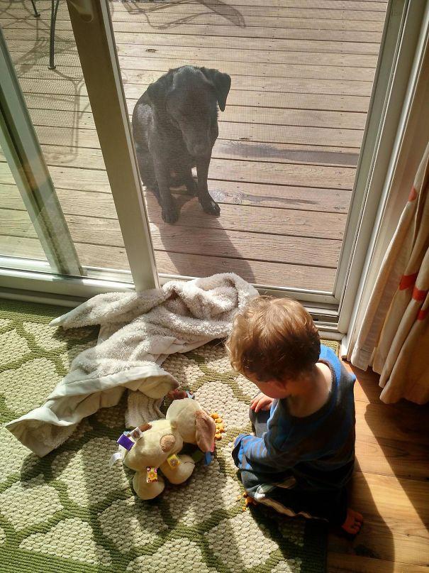 30張為什麼永遠不該讓你的「孩子跟狗狗獨處」的爆笑悲劇照!
