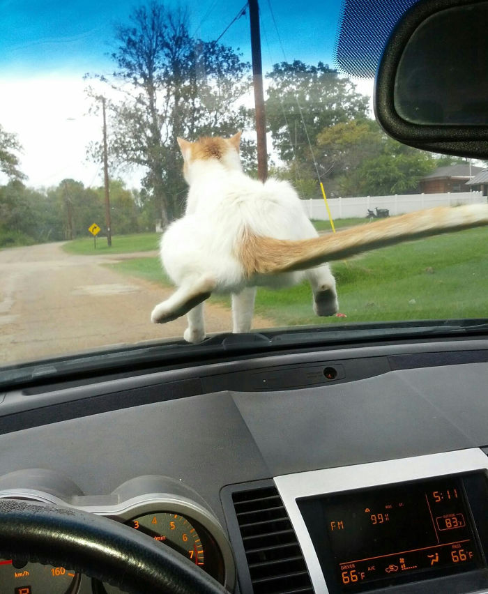Wife Drives To Grandma's House. Amount Of F*cks Given By Our New Rescue Cat: Zero