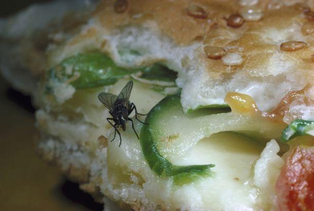 當「蒼蠅降落在食物上時」這就是會發生的事情!別怪我沒警告你啊!