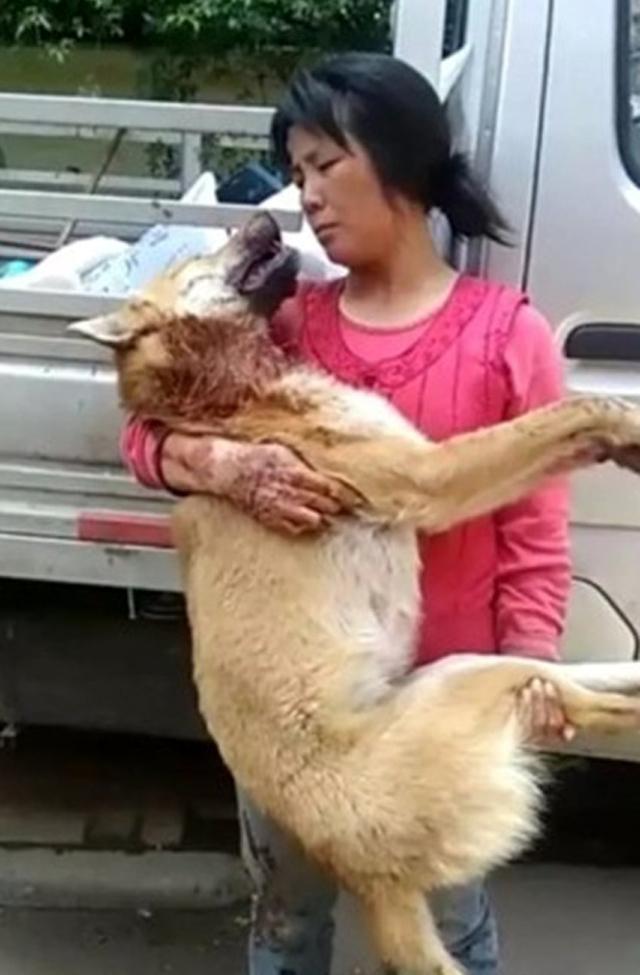 愛犬慘遭「勒頸割喉」濺血死,全因為「性侵」鄰居。(非趣味)