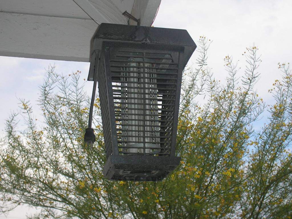捕蚊燈根本就殺不到蚊子?網又示範:只要加了「秘密誘餌」蚊子屍體堆到跟山一樣高!