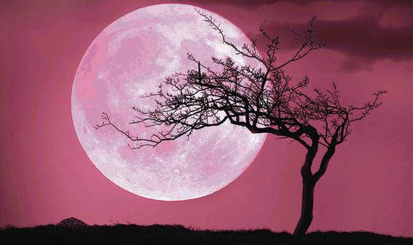 日本4月11日會出現「粉紅色的月亮」,搭配著櫻花讓大家「戀愛指數」衝爆表!