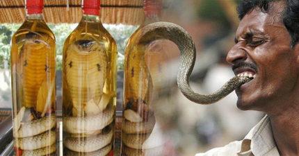 驚!男子抓眼鏡蛇「泡酒一個月」爽補,一開封「蛇復活」狠狠報仇!