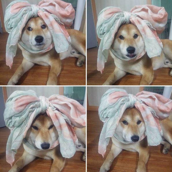 柴柴「手手被石獸咬住」痛到張嘴尖叫,超有戲表情「犬界奧斯卡」萌翻網路!加碼:10張更搞笑照片!