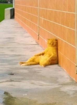 貓咪受夠人生整個崩潰坐下靠牆,抓到有人偷拍「表情超精采」。