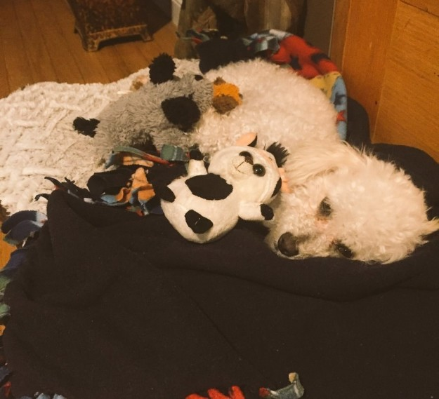 主人分享狗狗「把娃娃當成自己的親生小孩」的故事照片,讓萬名網友為她難過哭泣。