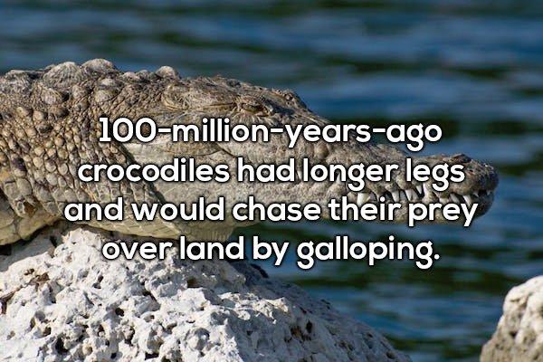 20個讓你「看完驚訝到下巴合不起來」的世界驚奇事實 鱷魚曾經有長腿追捕獵物!