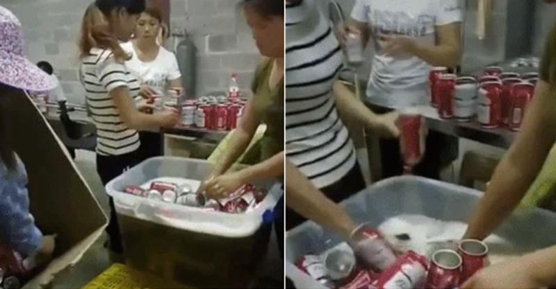 偷拍到的啤酒工廠片段,讓人以後不敢喝了!網友:「難怪會頭痛!」