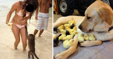 35張讓你心情美好的「偉大的動物事蹟」照片!#30 羨慕猴子可以亂襲胸...