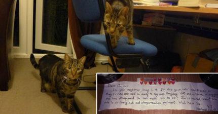 愛貓車禍死亡主人難過心碎,有天收到「神秘紙條」才知道貓咪生前的另一個超感人身分!