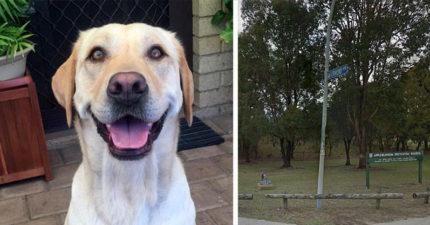 她把狗狗帶去公園散步,沒想到狗狗遭受到跟「小燈籠」一樣的悲慘遭遇...