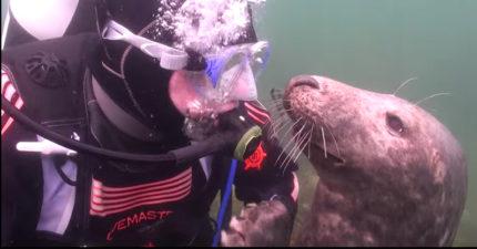 潛水員不懂這兩隻超萌海狗想要幹嘛,直到他把手伸出去被「往前拉」... (影片)