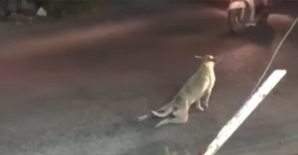 可憐「殘障流浪狗」在地上爬行請求幫助,看到他本性網友罵:「活該!」