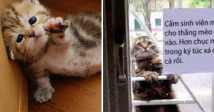 宿舍狠心把可愛的小貓關在外「禁止入進」,仔細看公告「男生嫉妒到死」!