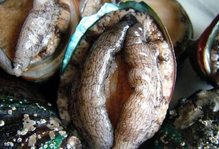 海灘上螃蟹誤認女子陰道是「鮑魚」直接用力夾!友人立刻幫她開始「把毒吸出來」...