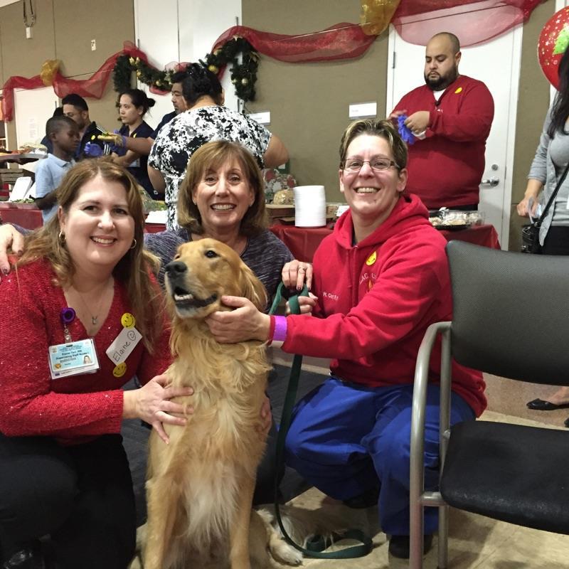 黃金獵犬被殘忍虐待「還是相信人類是好的露出笑容」讓人心碎,痊癒後可愛到人人都搶著養!(20張)