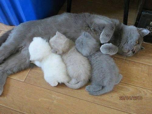 7張媽媽生太用力把「墨水擠完」的越來越白兄弟照!#1 老虎變這樣也太扯!