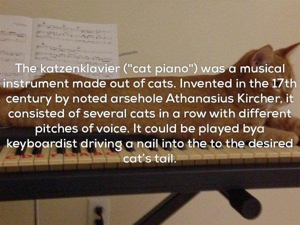 22個讓你「長出1公斤雞皮疙瘩」的超驚悚知識。#17 貓咪曾經是一種殘忍樂器!