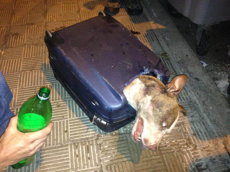 他們在看到行李箱的「慘況」把他們都嚇到了!主人藉口讓人傻眼...