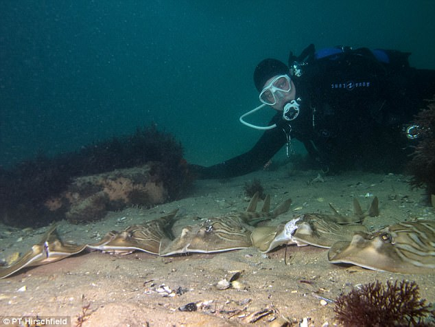 潛水員在海底拍到「頭被切半的活魚」殘忍照片,「滿滿惡意」讓大家都怒了!(14張+影片)