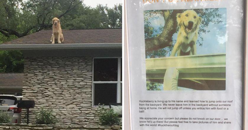 「狗狗被困在屋頂」路人嚇得要報警,但看到「門口告示」後馬上笑瘋!