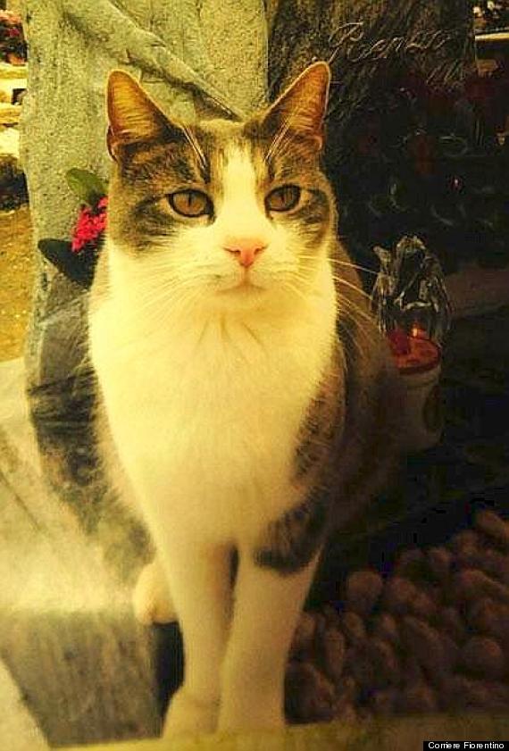 77歲阿伯逝世後,他的貓咪因為太想他「每天把對他的愛放在墳前」全網爆哭...