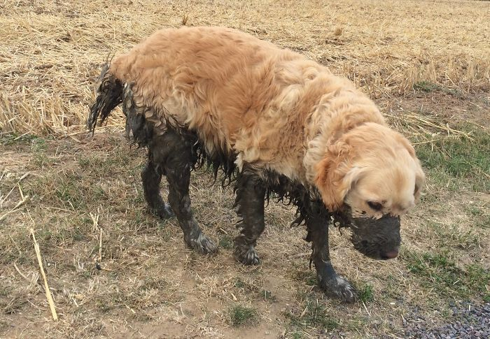 30張為什麼絕對不該讓毛小孩去玩泥巴的「可愛崩壞照」!