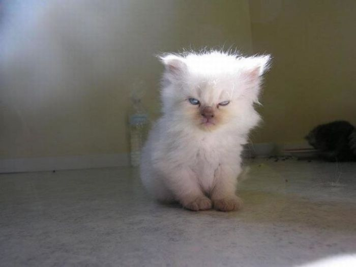 30張「趁可愛貓咪不注意」人類拍到的惡魔顯露恐怖萌照! #10 好像中邪了還是想抱抱!