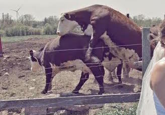 新人農場旁拍攝「浪漫婚紗照」,後面「抽插亮點」讓這張變成全網最美風景!