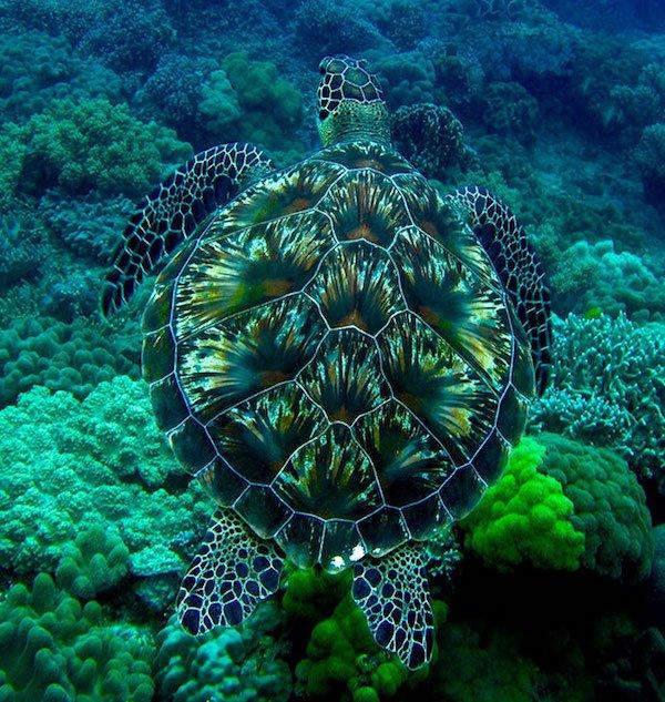 30隻基本上根本就是透明的「最強保護色動物」。