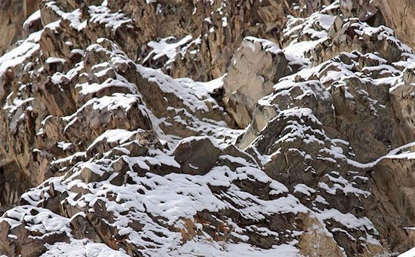 amazing wild animal camouflage nature 14 5926904a8f4de  7001 Camo level: Expert. Can you spot them all? (30 Photos)