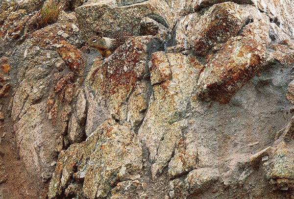 animal camo level expert can you spot them all 30 photos 23 Camo level: Expert. Can you spot them all? (30 Photos)