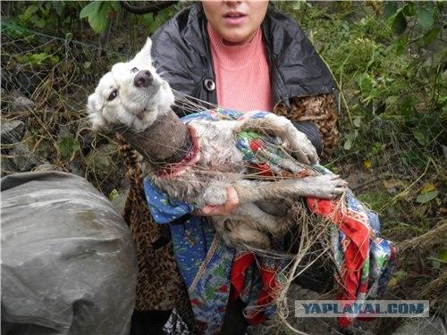 狗狗被惡作劇「罐子套頭死亡項圈」沒人肯靠近,拯救後「現在天使模樣」會讓你露出笑容!(影片)