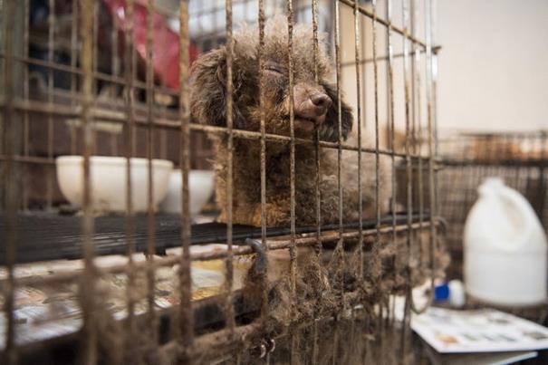 狗狗「一輩子被關地下室鐵籠」只會轉圈圈 救出後感人畫面秒融化你心!