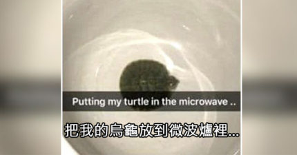 屁孩少女「微波加熱烏龜」PO慘死照炫耀,網撻伐求警:「媽媽也一起銬走!」