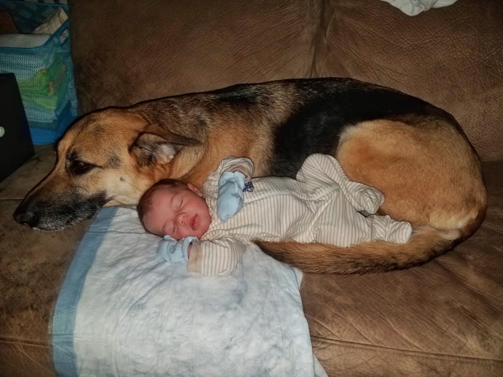 狗狗半夜不睡覺「溜進寶寶房」監視器超有愛畫面讓人感動到哭