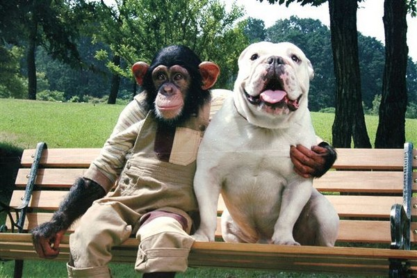 《狗狗猩猩大冒險》感動回歸!「小龐女兒+詹姆斯曾孫」新搭檔比以前更萌更可愛!