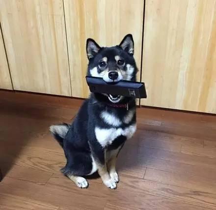 馬麻說不能吃冷氣遙控器!鐵胃柴柴牙癢「改啃電視的」 網笑翻:機械狗!